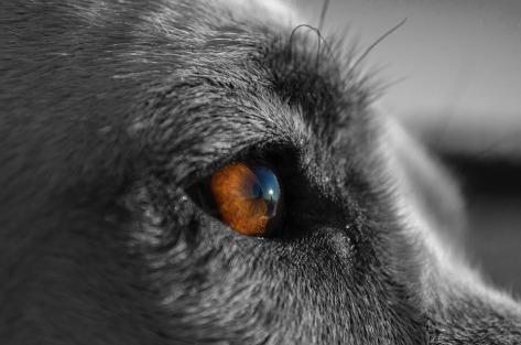 canine-863032_960_720